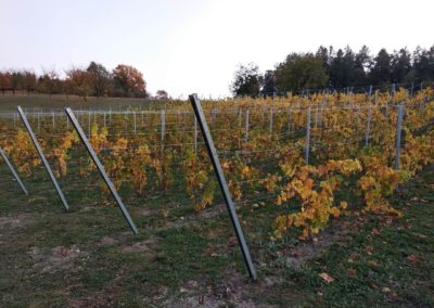 Vinohrad Rájec – Nectar Lucis